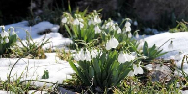 mart ayı çiçek ile ilgili görsel sonucu