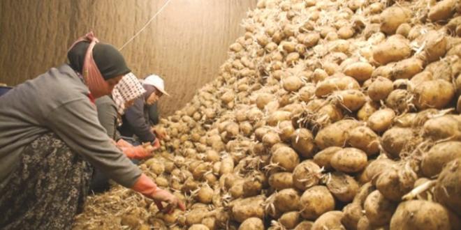 patates stokçuları ile ilgili görsel sonucu