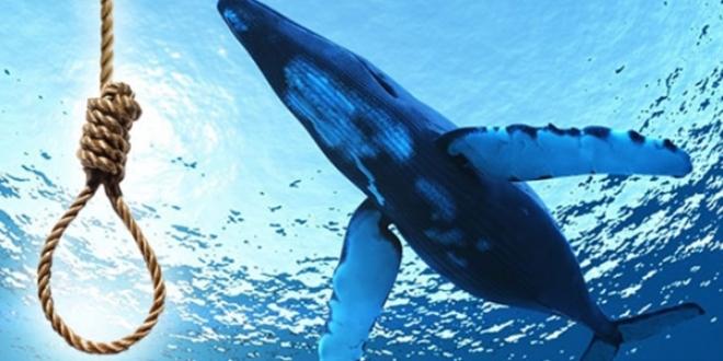 Mavi Balina ölüme götürüyor ile ilgili görsel sonucu